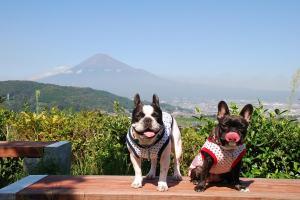 富士川サービスエリアに着きました~