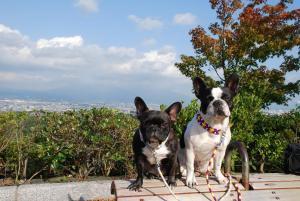 富士山に雲がかかってますよ。
